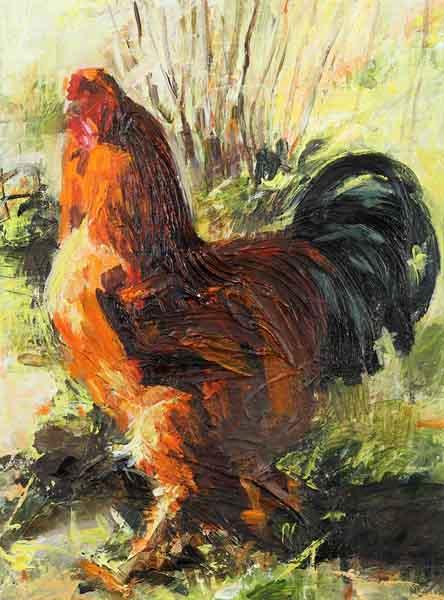 hercules-brahma-cockerel